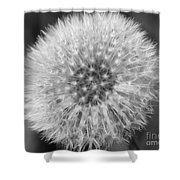 Dandelion Fluff In Black And White Shower Curtain
