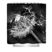 Dandelion Glow Shower Curtain