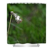 Dandelion In The Wind Shower Curtain