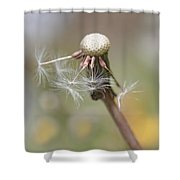 Dandelion Last To Fly Away Shower Curtain