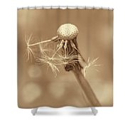 Dandelion Last To Fly Away Sepia Shower Curtain