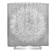 Dandelion Marco Abstract Gray Shower Curtain