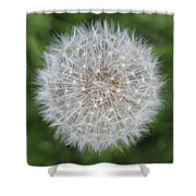 Dandelion Marco Abstract Shower Curtain