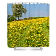 Dandelion Meadow And Alone Tree  Shower Curtain