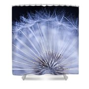 Dandelion Rising Shower Curtain