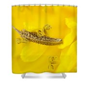 Dandelion Seed And Flower Shower Curtain