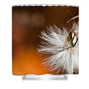 Dandelion Seed Head And Fall Color Background Shower Curtain