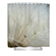 Dandelion Seed Head Macro II Shower Curtain