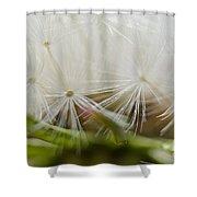 Dandelion Seed Head Macro IIi Shower Curtain