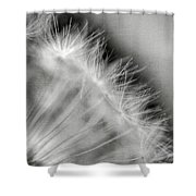 Dandelion Seeds - Black And White Shower Curtain