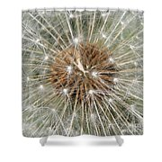 Dandelion Square Shower Curtain