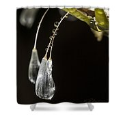 Dandelion Tears Shower Curtain