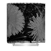 Dandelion Weeds? B/w Shower Curtain