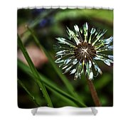 Dandelion Will Make You Wise Shower Curtain