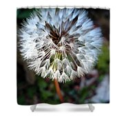 Dandelion Wish  Shower Curtain