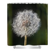 Dandelion With Abstract Grasses Shower Curtain