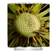 Dandelion With Seeds Shower Curtain