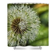 Dandelion With Water Drops Shower Curtain