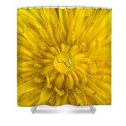 Dandelion With Waterdrop Shower Curtain