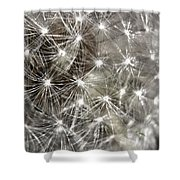 Dandillion Seed Head 2 Shower Curtain