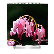 Dangle Shower Curtain