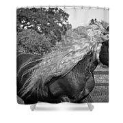 Dante In Black And White Shower Curtain
