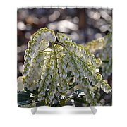Dappled Pieris Japonica Shower Curtain