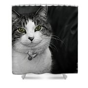 Dare To Look Into My Green Eyes Shower Curtain