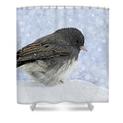 Dark Eyed Junco - Digital Snowflakes Shower Curtain
