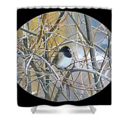 Dark- Eyed Junco Shower Curtain
