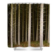 Dark Forest At Kielder Shower Curtain