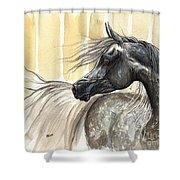 Dark Grey Arabian Horse 2014 02 17 Shower Curtain