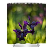 Dark Irises Shower Curtain
