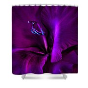 Dark Knight Purple Gladiola Flower Shower Curtain by Jennie Marie Schell