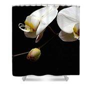 Dark Orchid Shower Curtain