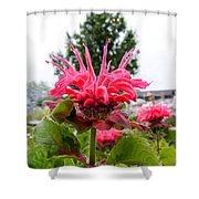 Dark Pink Bergamot Shower Curtain