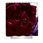 Dark Red Rose Shower Curtain