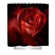 Dark Red Rose Shower Curtain