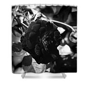 Dark Rose In Black And White Shower Curtain