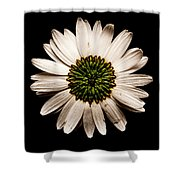 Dark Side Of A Daisy Square Shower Curtain
