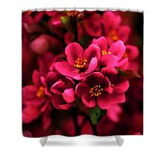 Dark Spring Dreams Shower Curtain