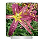 Dark Star Daylilies Shower Curtain