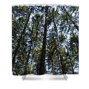 Dark Trees Shower Curtain