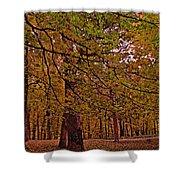 Darker Textured Autumn Trees Shower Curtain