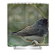 Darkeyed Junco  Shower Curtain