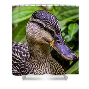 Darling Duck Shower Curtain