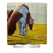 Dartmoor Ponies Shower Curtain