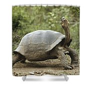 Darwins Finch And Volcan Alcedo Giant Shower Curtain