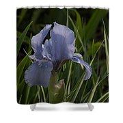 Dashing Pale Violet Iris Shower Curtain