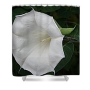 Datura Shower Curtain